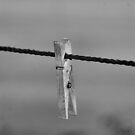 On A Wire by ShutterUp Photographics