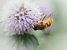 Striped buzz......... III by Bob Daalder