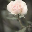 Soft Perfection by KBritt