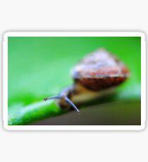 Garden Snail Sticker