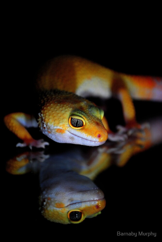 Mirror Gecko by Barnaby Murphy
