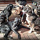 The Dogs Day Out by Lilian Marshall