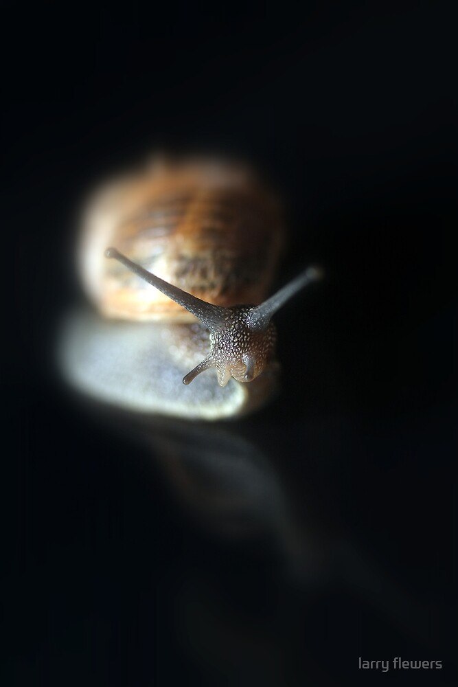Study of a Garden Snail by larry flewers