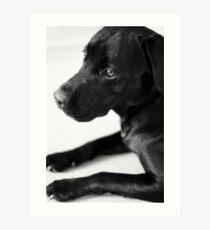 Dogs - Black Labrador Art Print