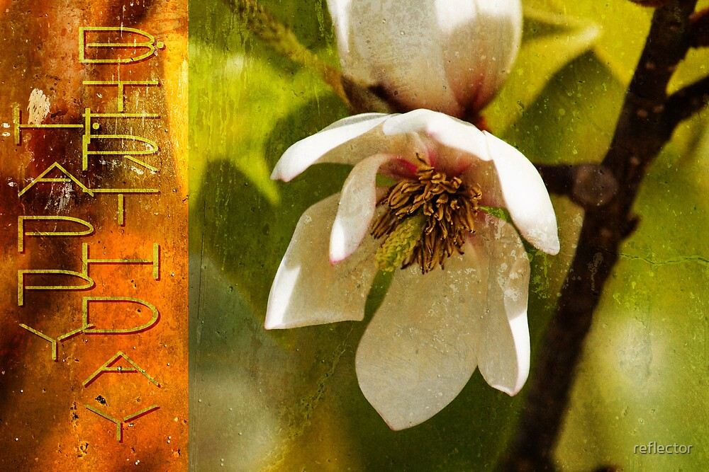 Hanging Magnolia by reflector