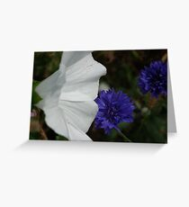 Colour Blooms Greeting Card