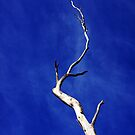 Tree by PerkyBeans