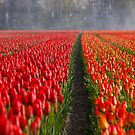 Tiptoe through the Tulips von Sarah Johnston