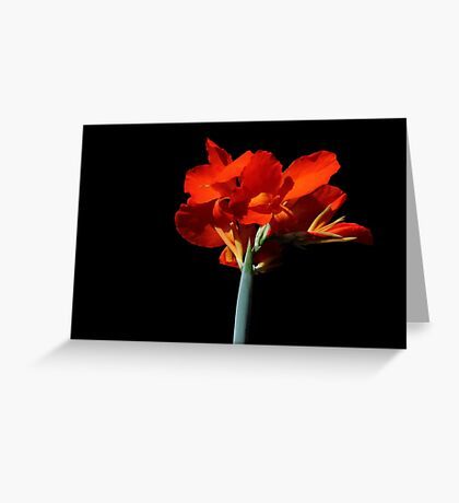 Black With A Hint Of Botanical Element ~ Part Six Greeting Card