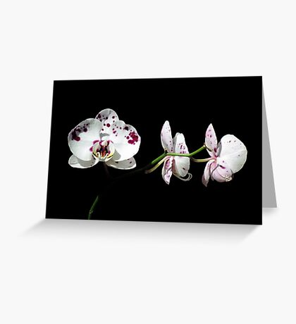 Black With A Hint Of Botanical Element ~ Part Eight Greeting Card