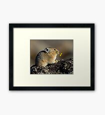 Trumpeting the Sunrise Framed Print