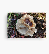 Pretty Fungus Canvas Print