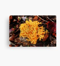 Yellow Fungus Canvas Print