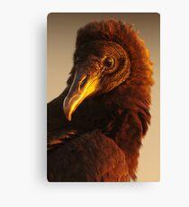 Golden Vulture Canvas Print