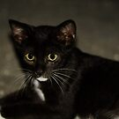 Nice Kitty! by vasu