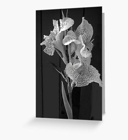 White Elegance Lily  Greeting Card