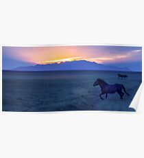 Mustang At Sunset - Utah West Desert Poster