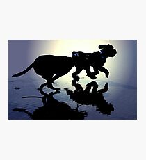 DOGS AT PLAY~ Photographic Print