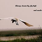 FLY HIGH by PALLABI ROY