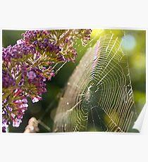 Buddleja and Web Poster