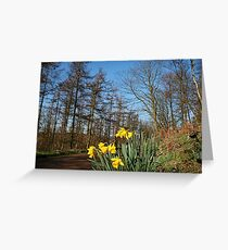 Colourful Spring walk in the woods Greeting Card