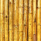Bamboo by acepigeon