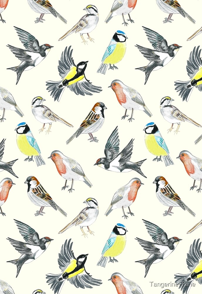 Illustrated Birds by Tangerine-Tane