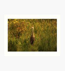 Sandhill Crane Standing on Shoreline Art Print