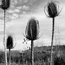 Black and White Calendar by Jess Meacham