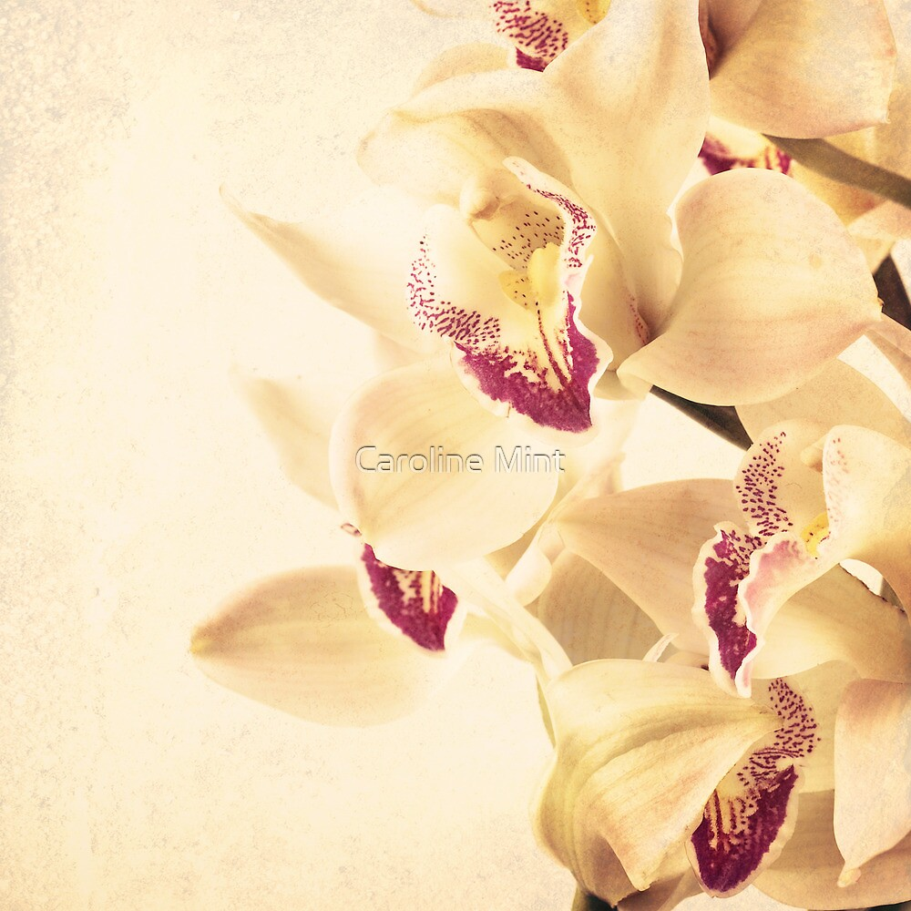 Vintage Orchids  by Caroline Mint