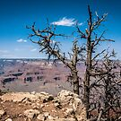 Viewing Grand Canyon by WiredMarys