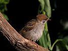 Tree sparrow by Peter Wiggerman
