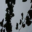 Grey Shadows Of Leaves iPhone Case by Random Artist No. 2