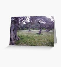 Olive Trees Marry A Flowers' Layer Greeting Card