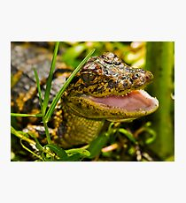 Gator in the Grass Photographic Print