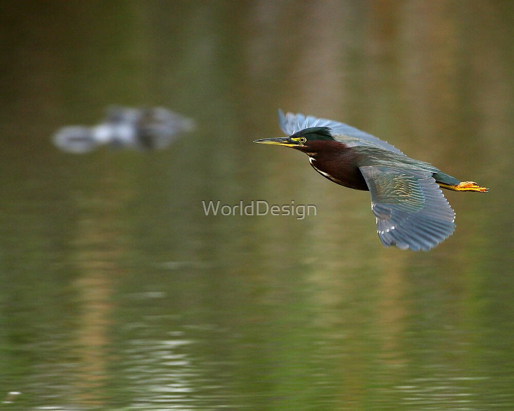 Green Heron & Gator by WorldDesign