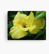 a beautiful flower of gladiolus Canvas Print