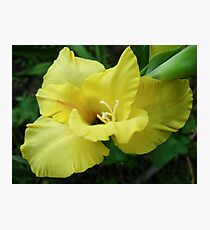 a beautiful flower of gladiolus Photographic Print
