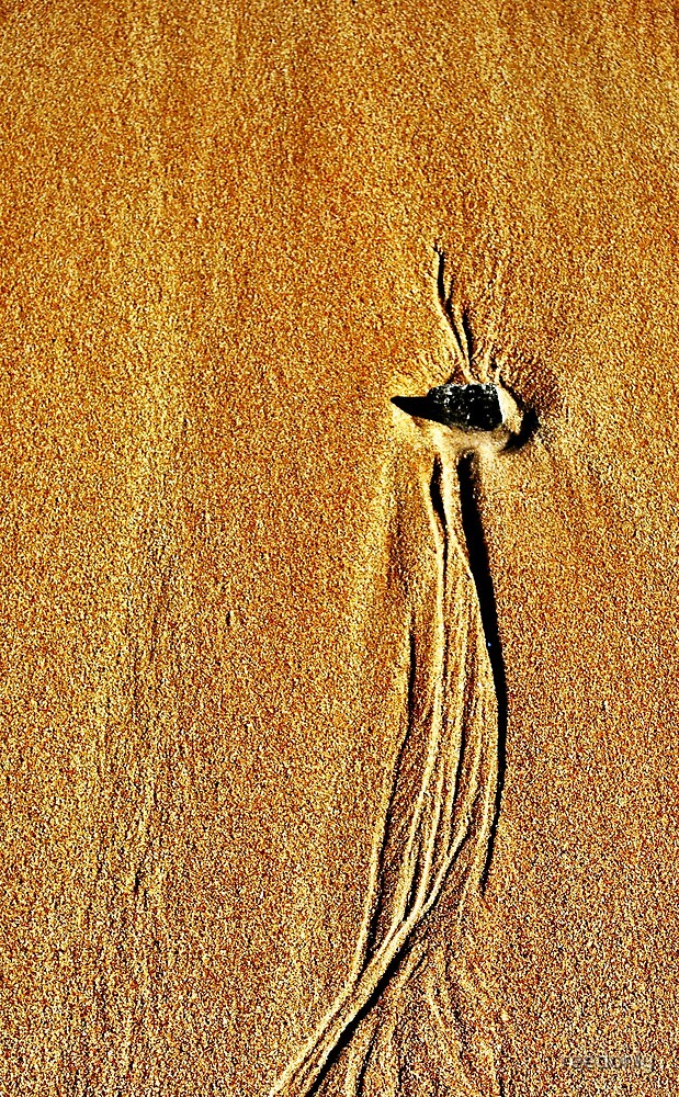 Sand Swirl Bird of Paradise by reedonly