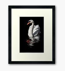 swan reflected in  dark water Framed Print
