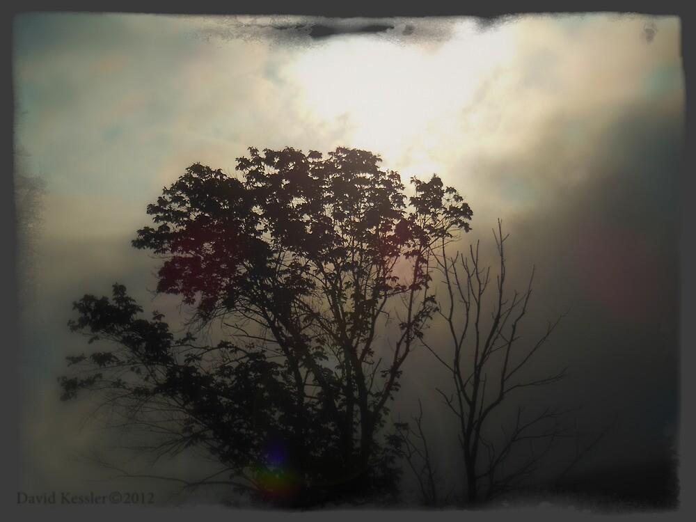 hope springs eternal by David Kessler