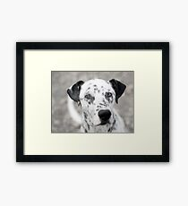 Looking directly to your eyes Framed Print