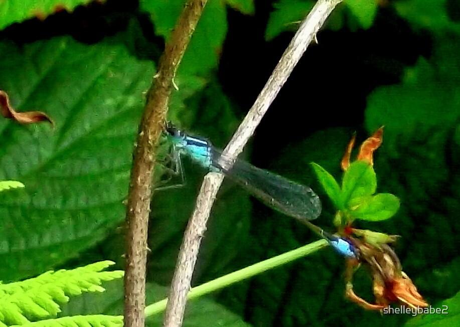 Blue Dragon... by shelleybabe2