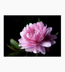 Pink Flowering Almond Photographic Print
