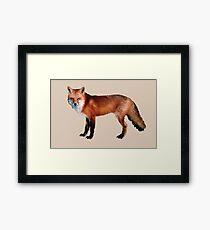 Pop Fox Framed Print