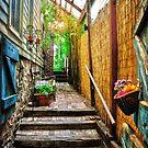 A walkway by Debra Fedchin
