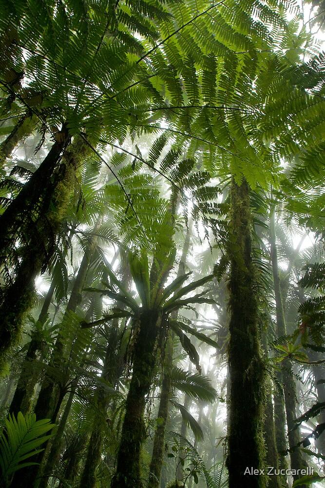 Foggy Tree Fern Forest - Pohnpei, Micronesia by Alex Zuccarelli
