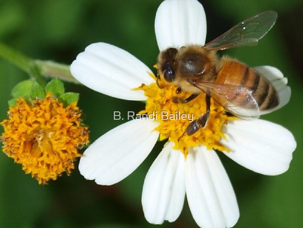 Bee business by ♥⊱ B. Randi Bailey