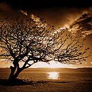 Golden Sun by Ryan Conyers