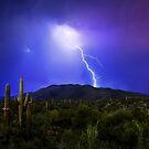 Saguaro Strike by MattGranz